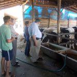 Amerikai szakember a vajdasági tehénfarmokon