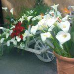 Garden Flora - Regionális Virágkiállítás és Vásár